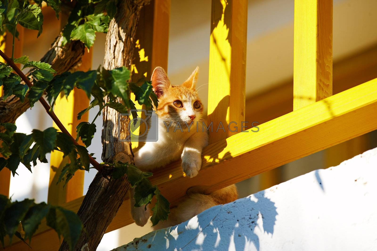The cat lies on a balcony and looks aside