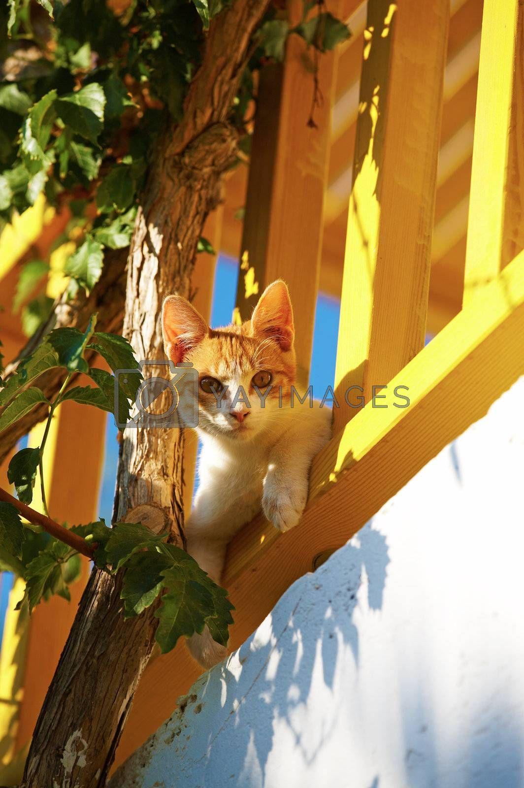 Royalty free image of The cat lies on a balcony by DeusNoxious