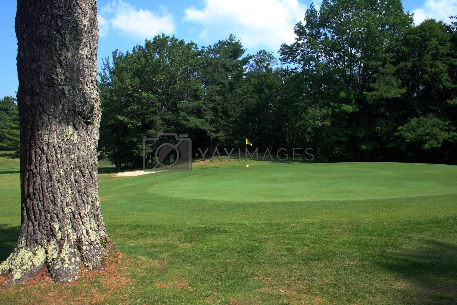 View of golf green with a large tree by it's side