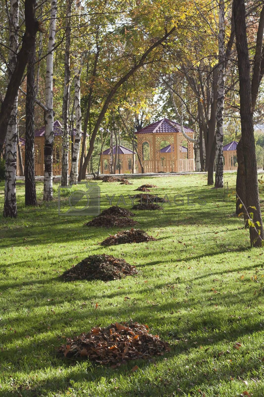 Vivid colors of autumn birch forest