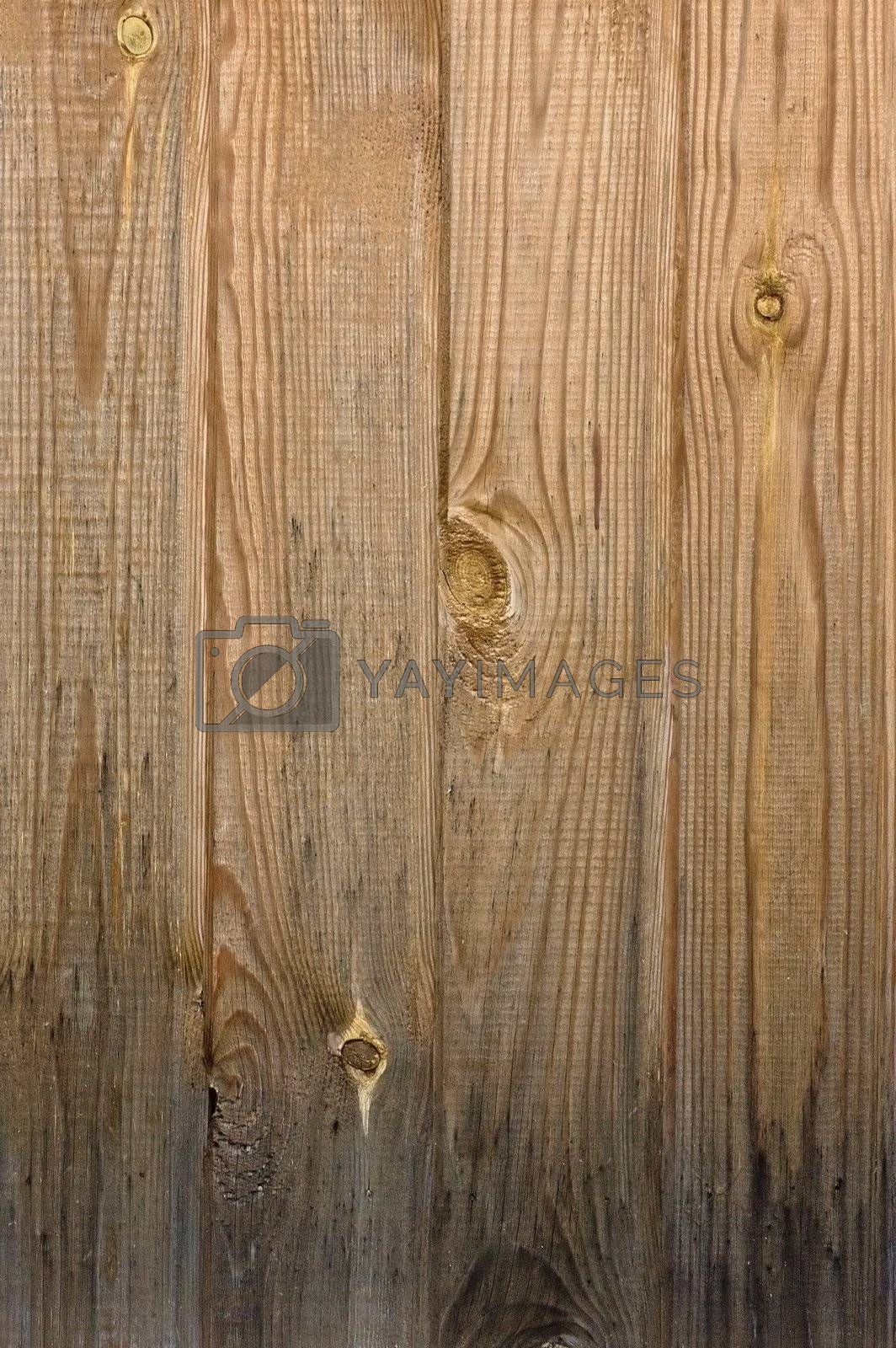 Royalty free image of Pinewood texture by dtma