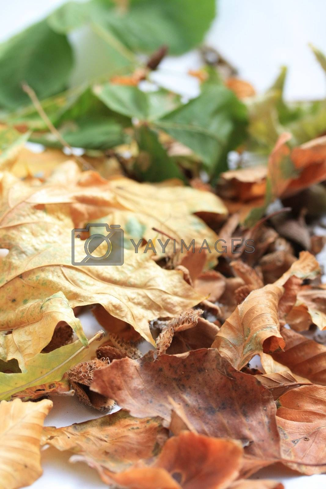 Royalty free image of Autumn leaves by studioportosabbia