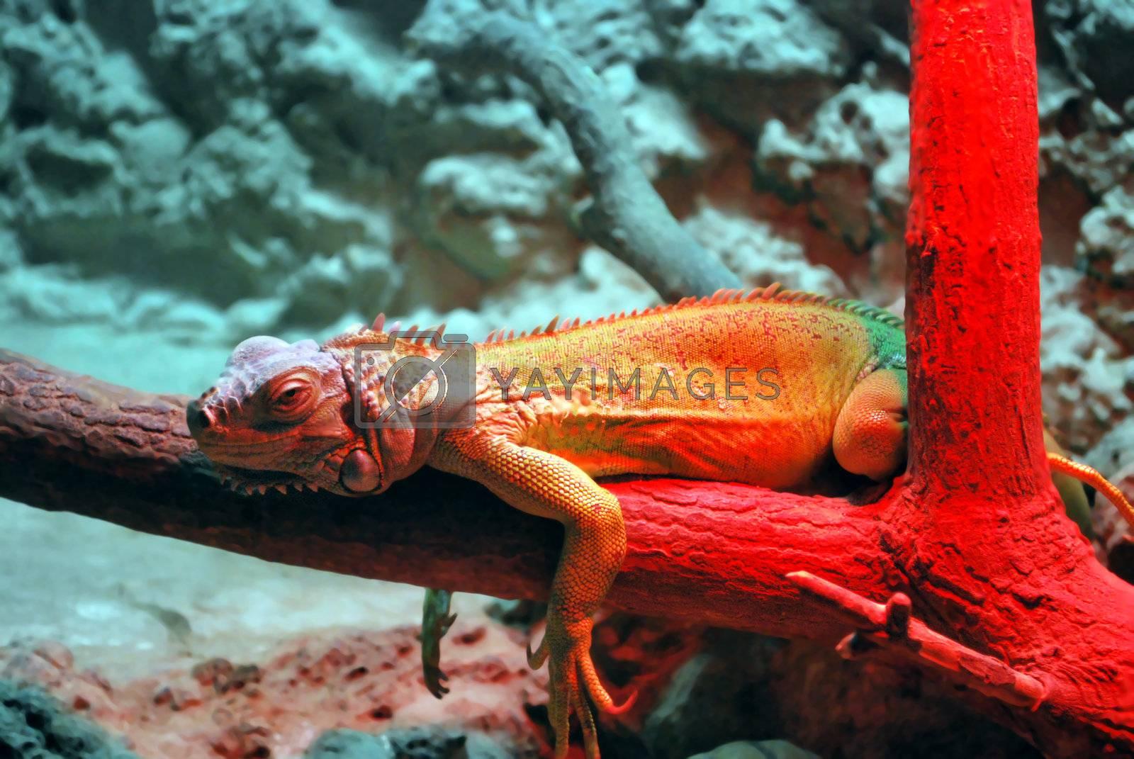 Royalty free image of Reptile On Red by Skovoroda