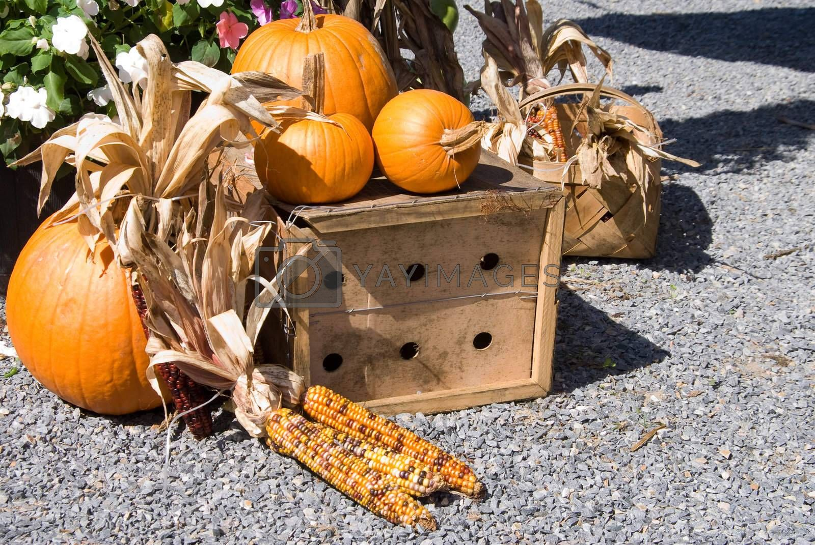 Royalty free image of Harvest by robeo