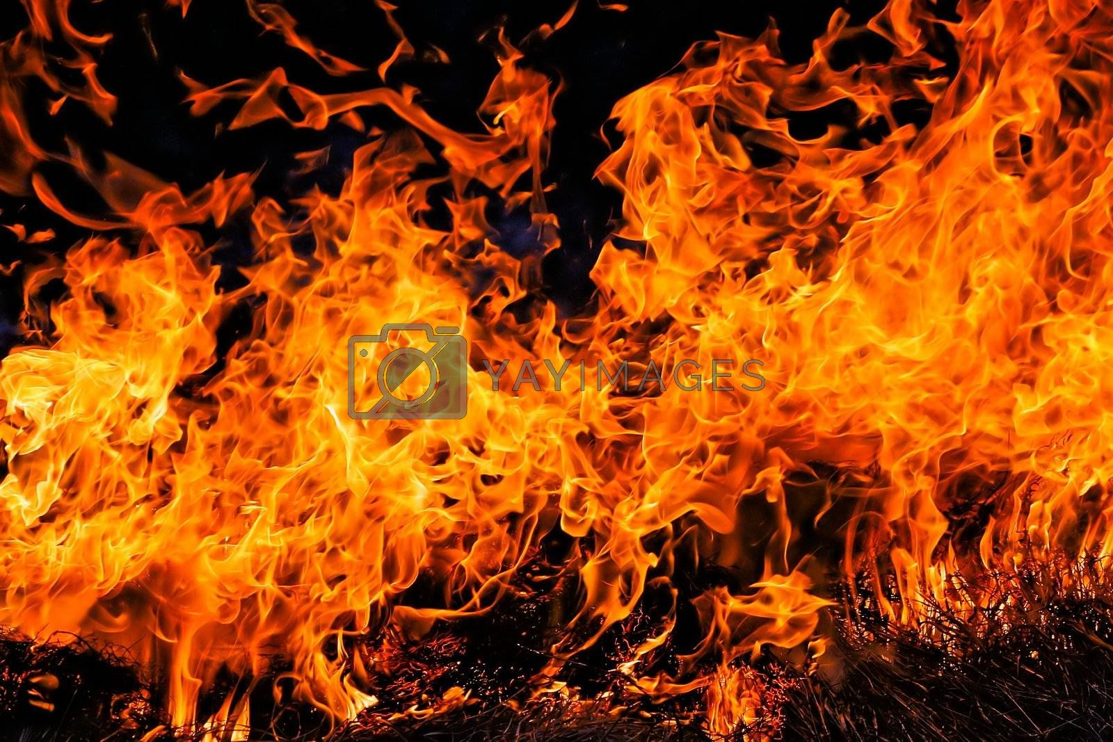 Royalty free image of Fire. Burning grass in spring by dtma