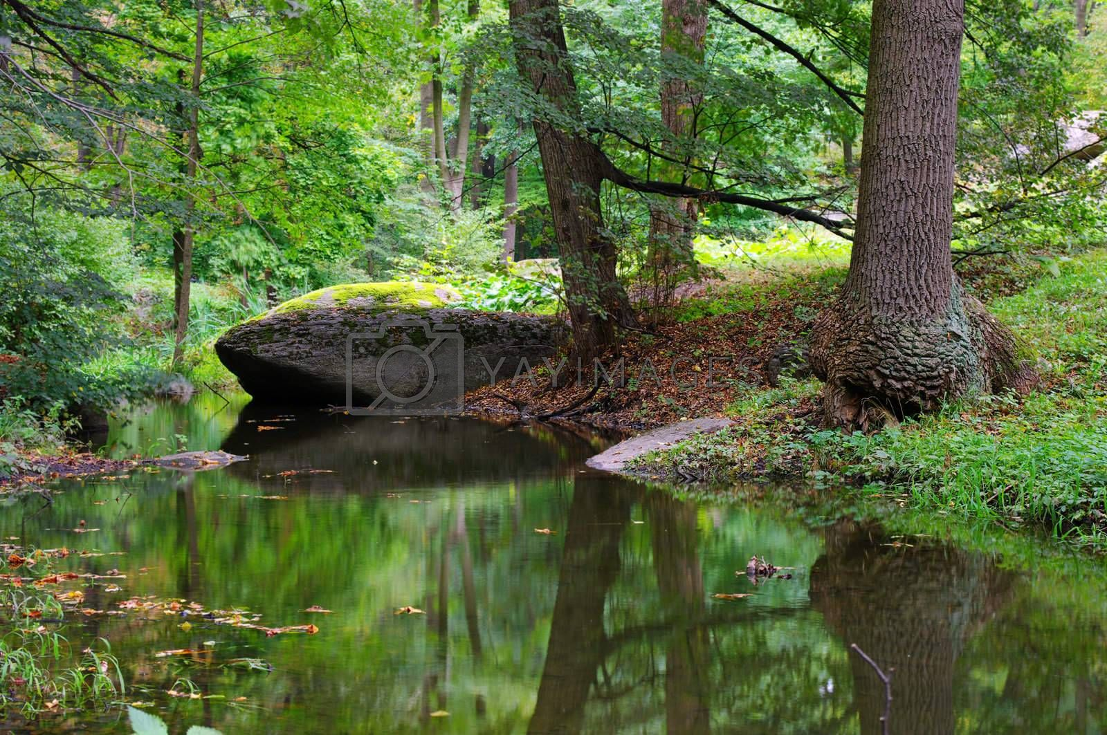 Royalty free image of green forest and river with big stone by dolnikow