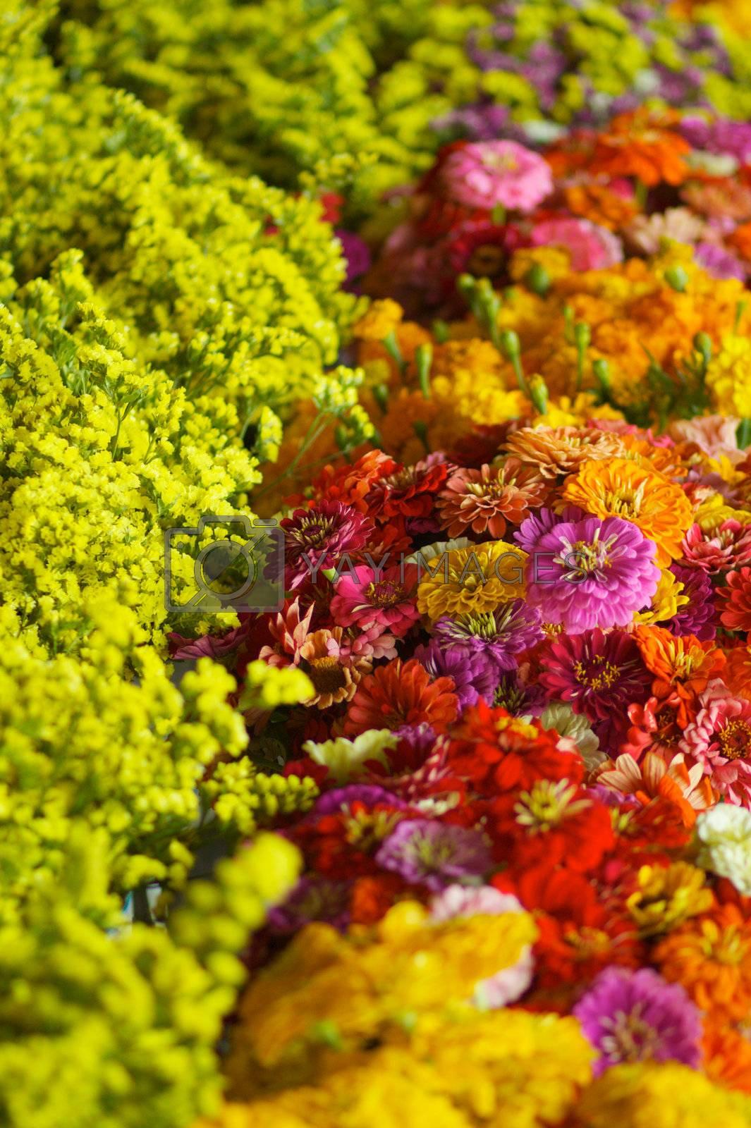 Royalty free image of Market flowers by bobkeenan