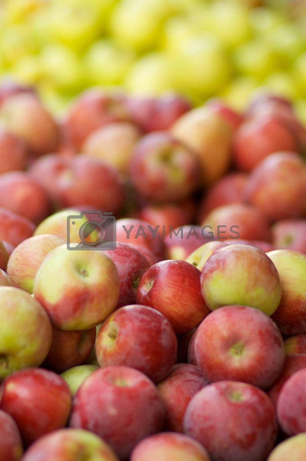 Royalty free image of Red and green Apples by bobkeenan