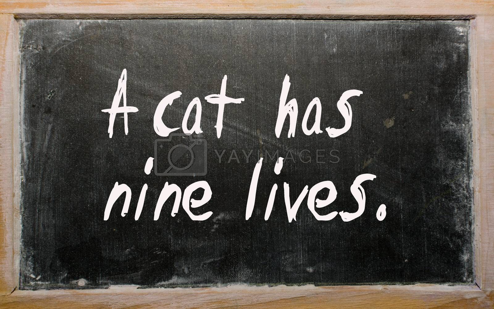 "Blackboard writings ""A cat has nine lives"""
