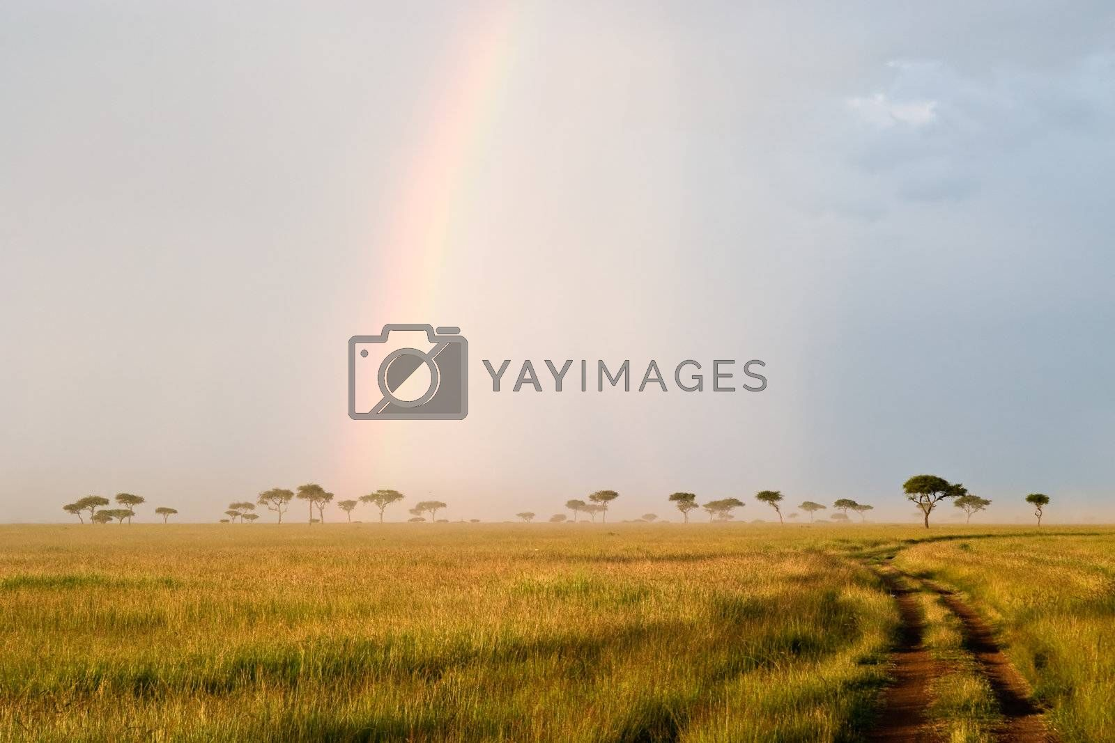 Royalty free image of Rainbow in the Savannah by ajn