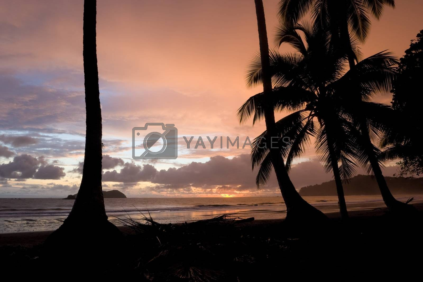 Royalty free image of Tropical Sunset by ajn