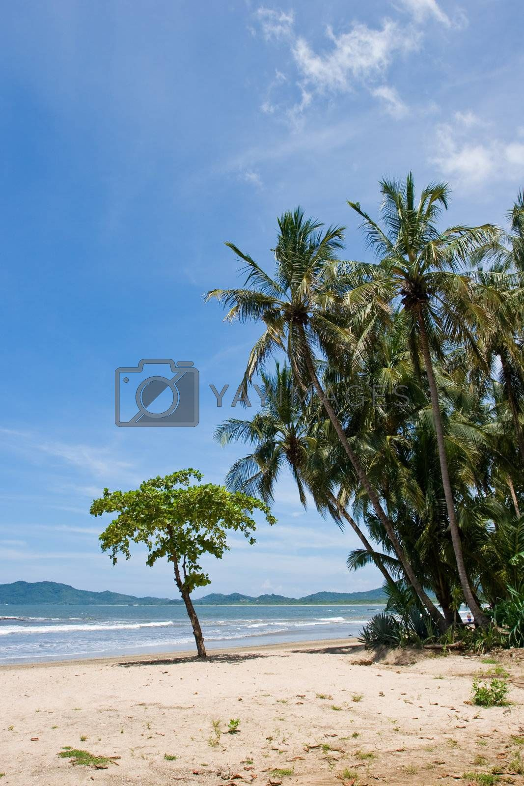 Royalty free image of Tropical Beach by ajn
