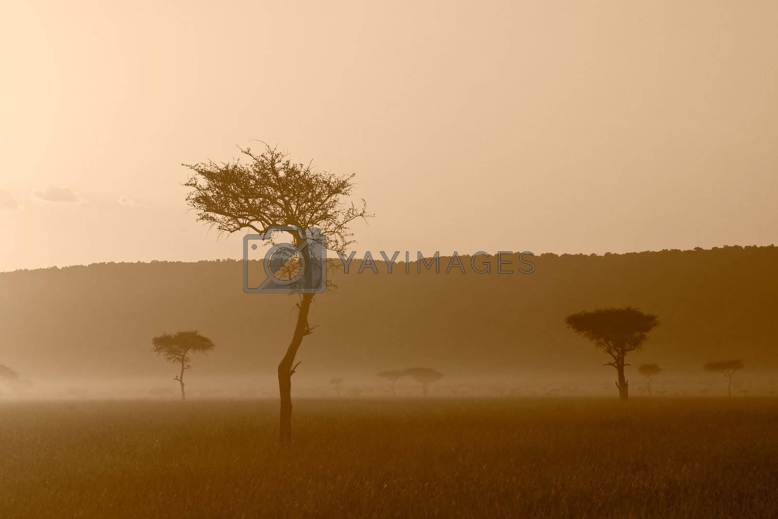 A beautiful sunset at Massai Mara, Kenya.