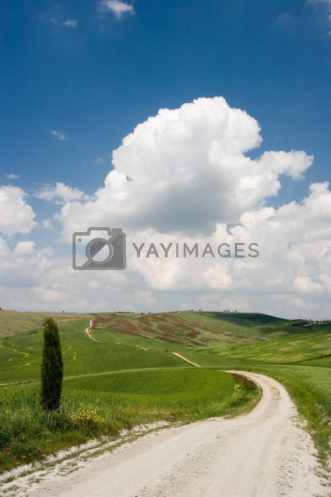 A countryroad in the Tuscan landscape. Tuscany, Italy.