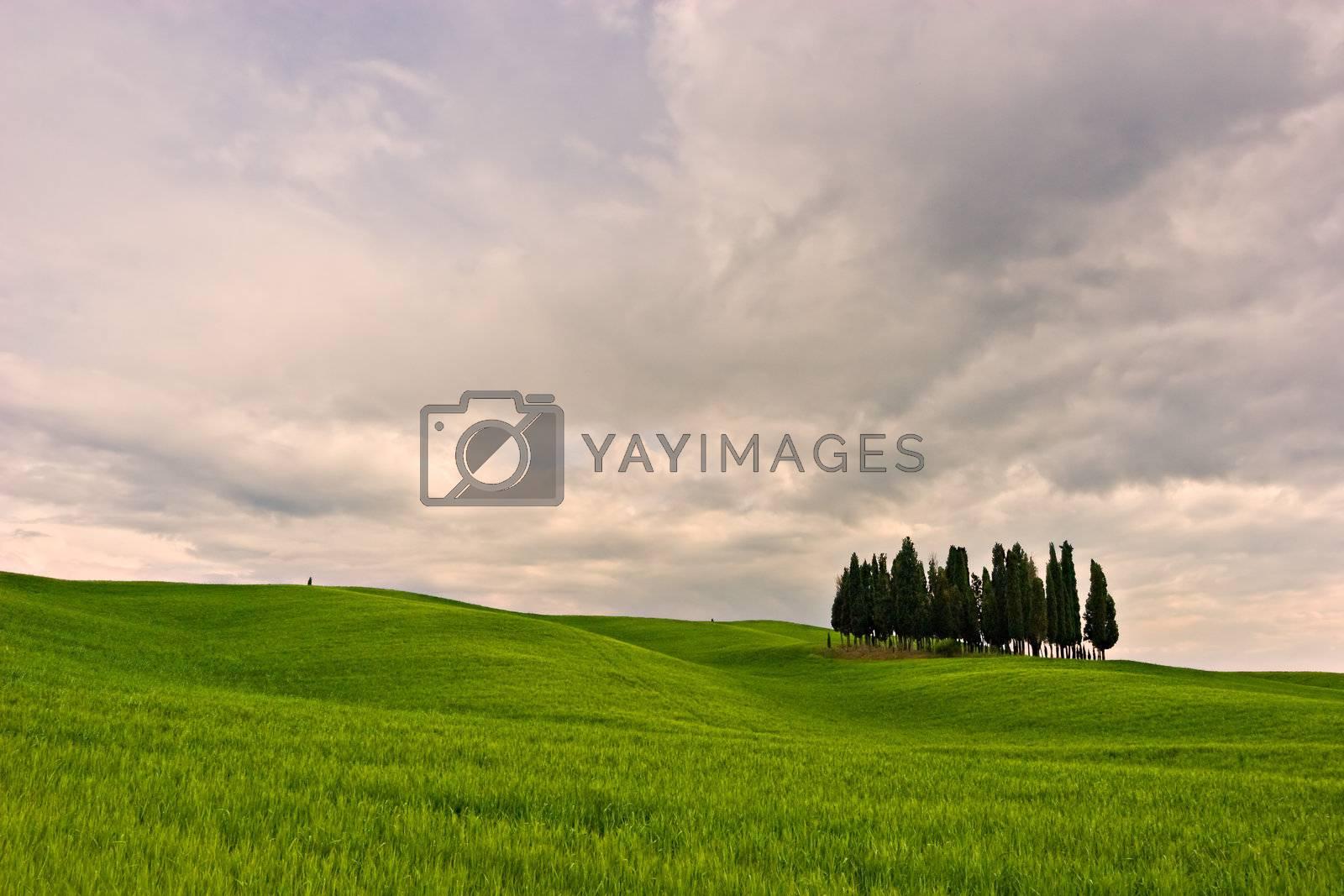 Beautiful Toscana by ajn