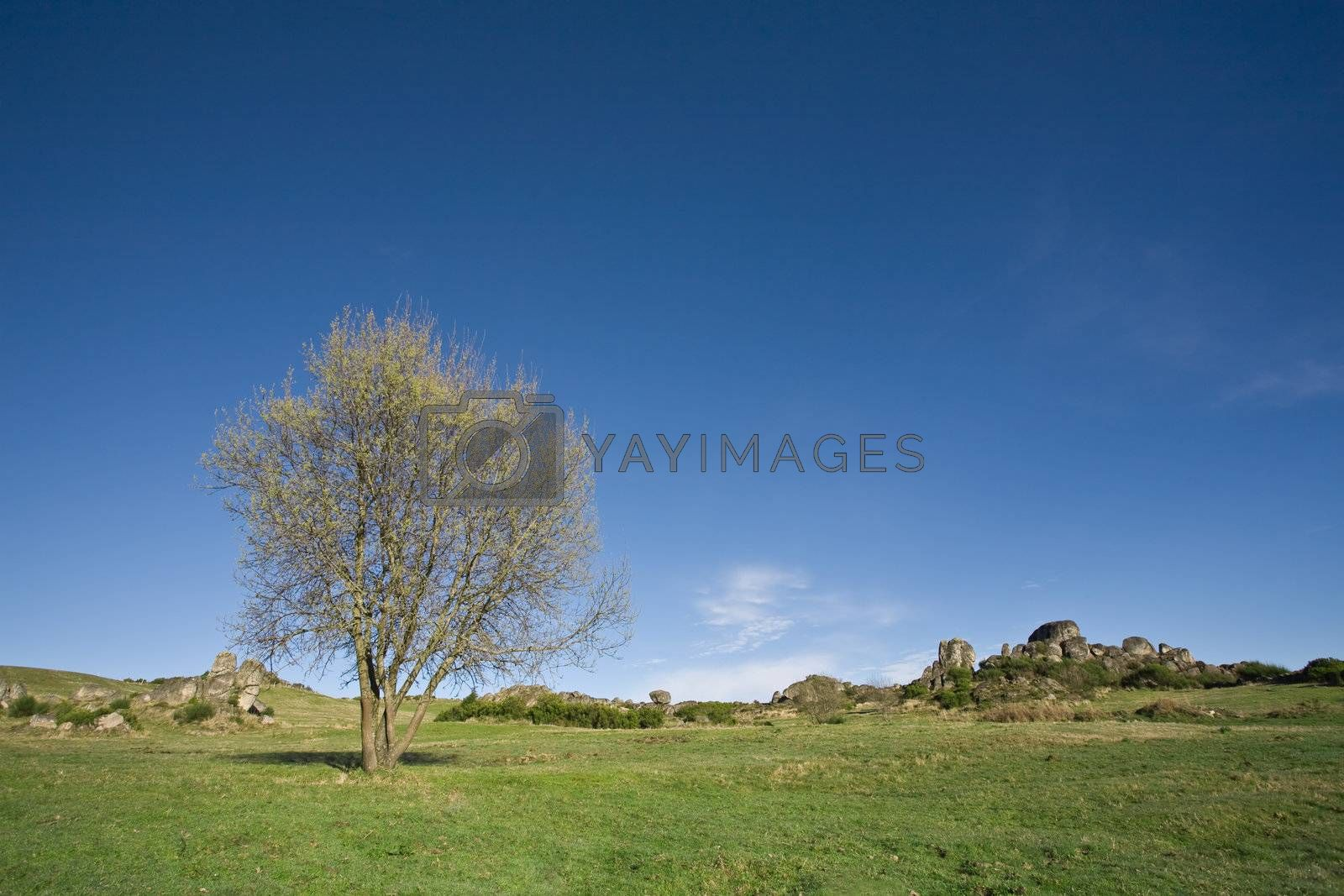 Photo of a lonely tree on a pasture field.