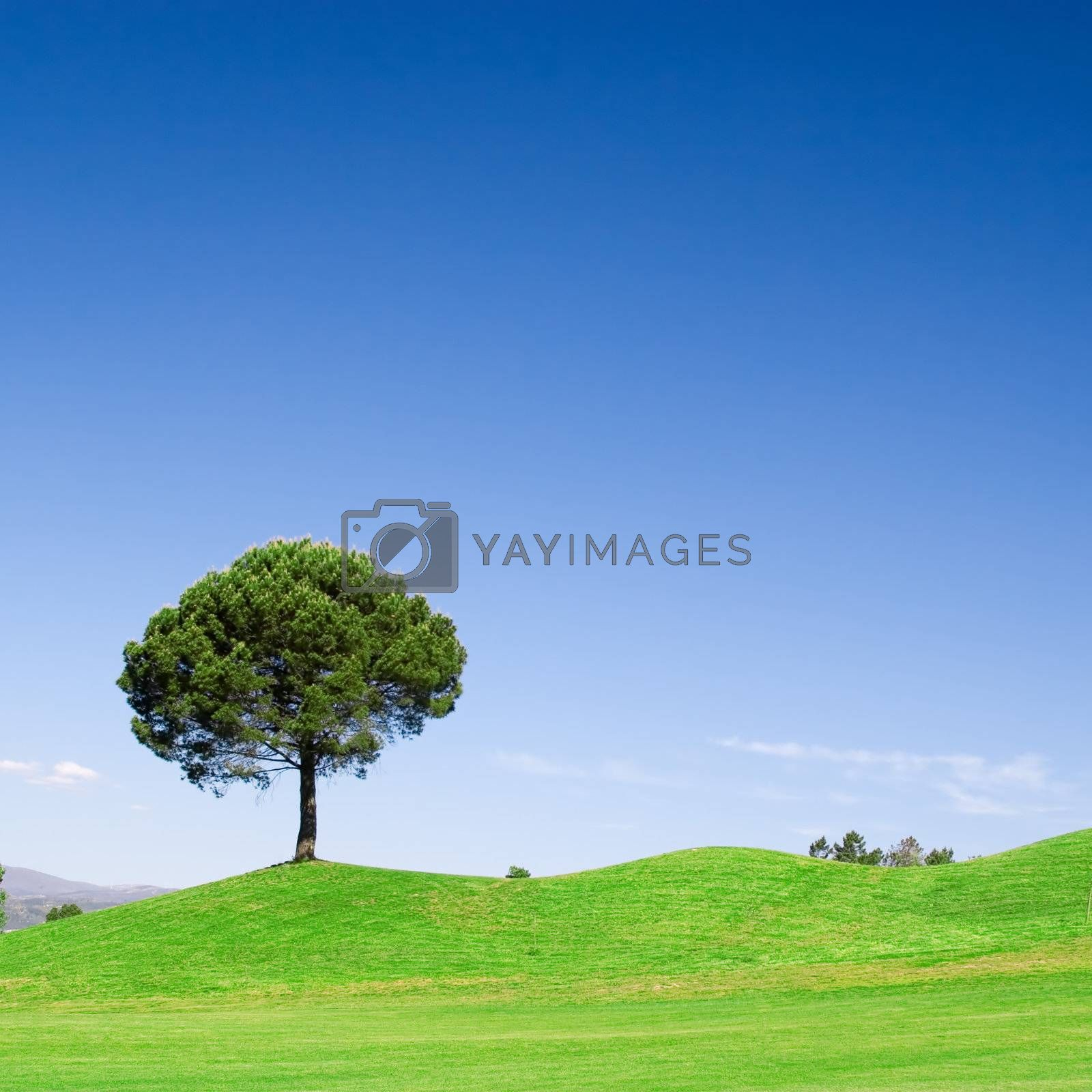 Royalty free image of Tree by ajn