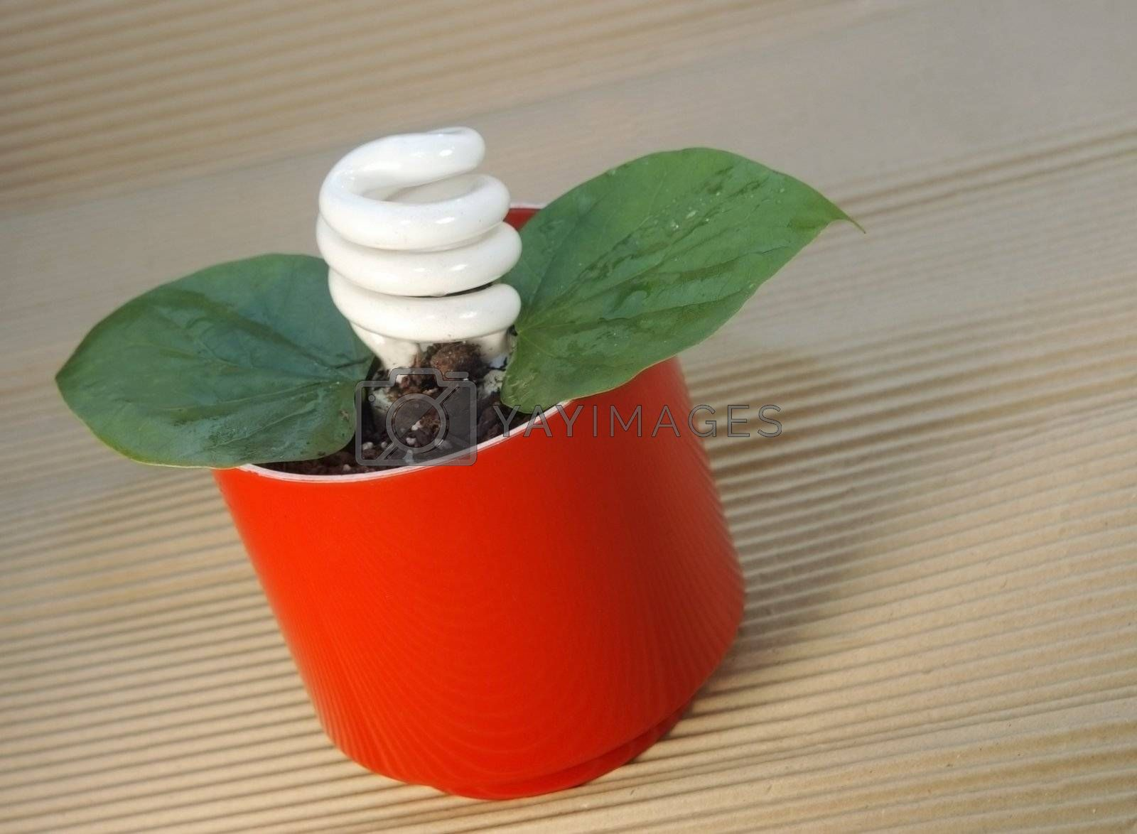 Energy-saving lightbulb blooms from this potted plant,  depicting the concept of environmentally conscious use of energy.
