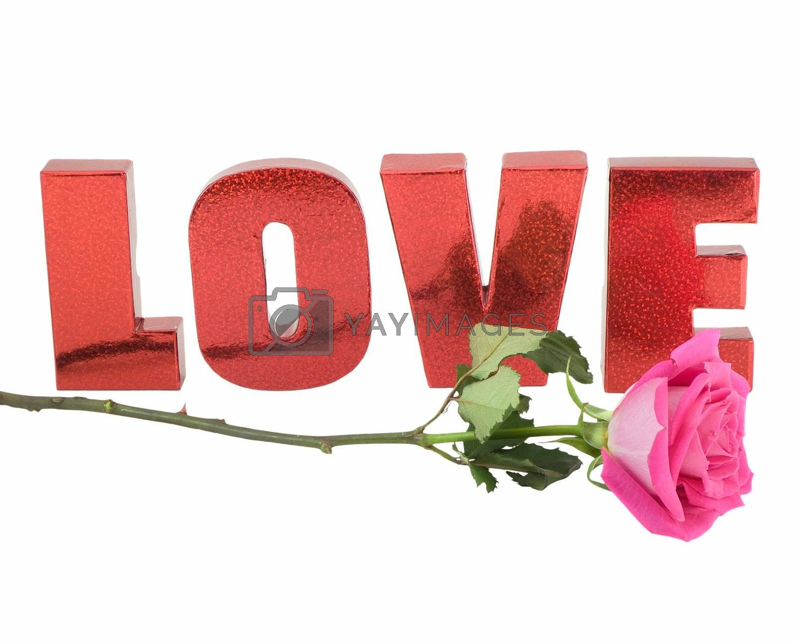 Pink rose and the word love isolated on white