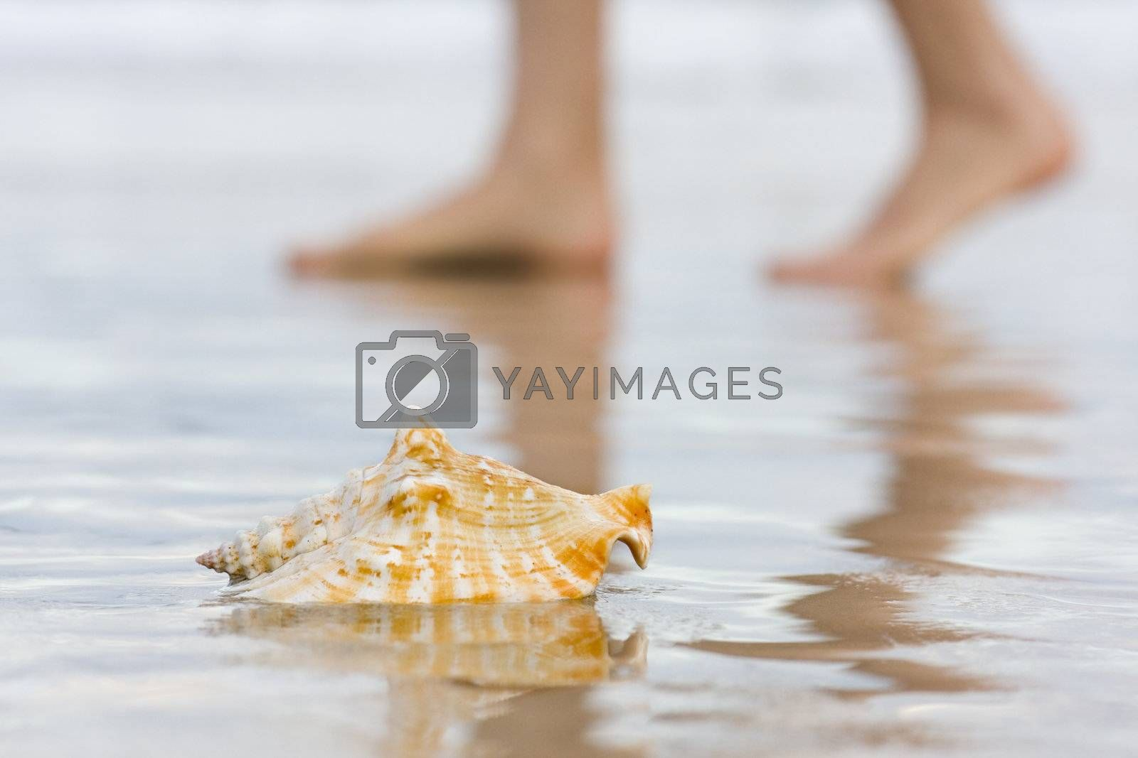 Shell on a beach with blurred bare feet in the background