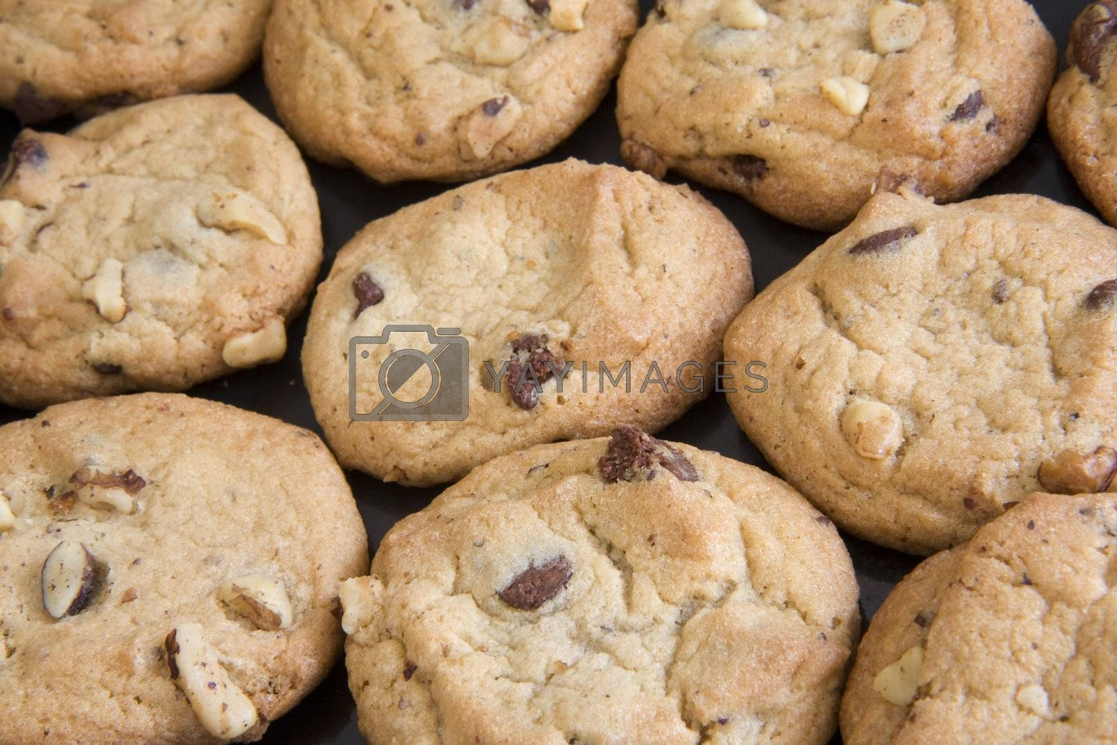 freshly backed cookies with chocolate chips and walnut slices - background