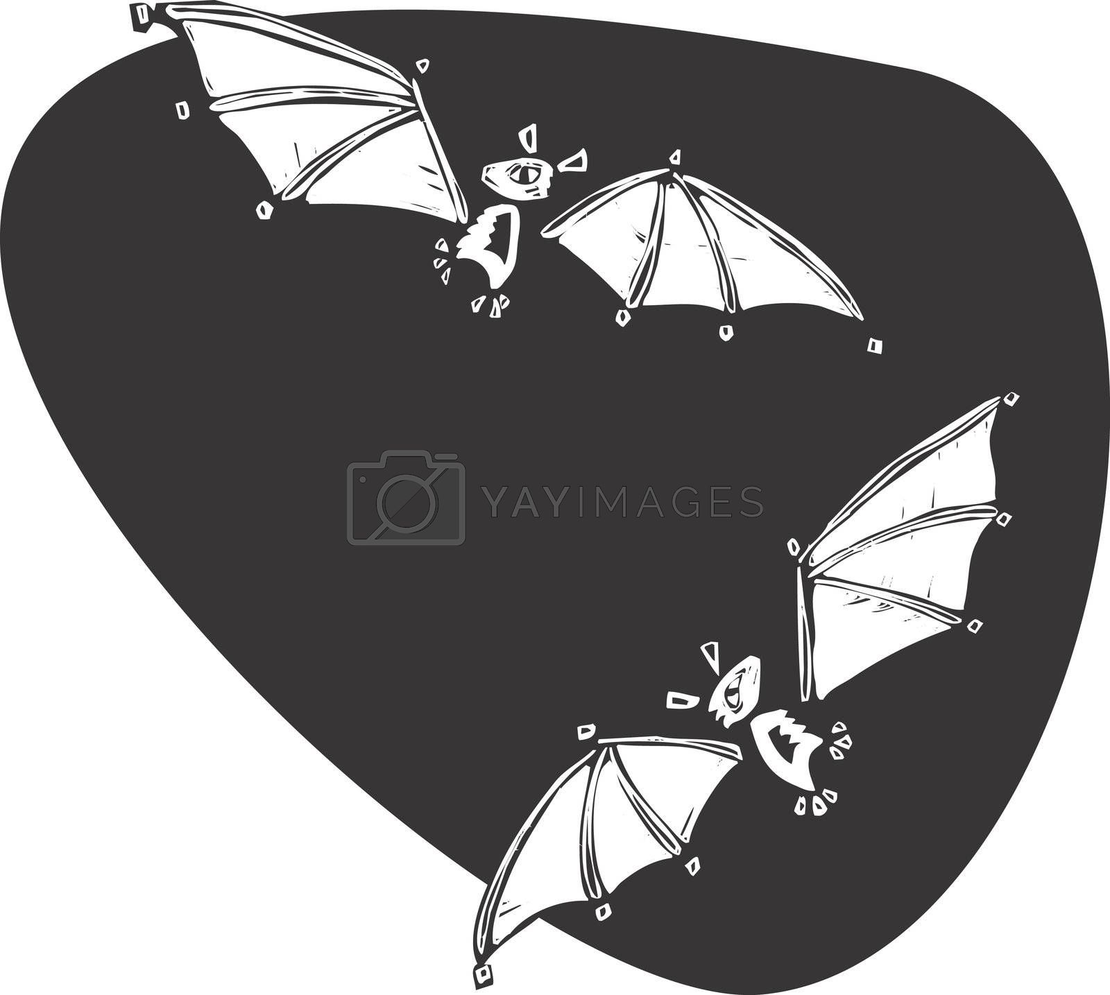 Two bats flying together in the night