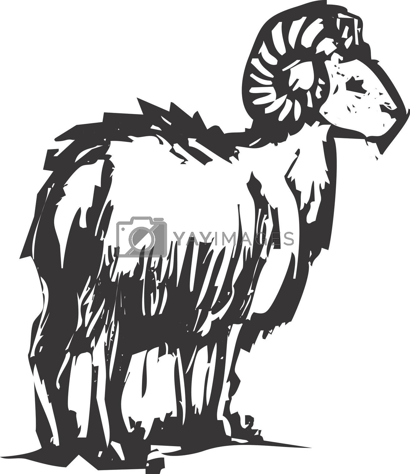 A big horn sheep from a mountainside out in the west.