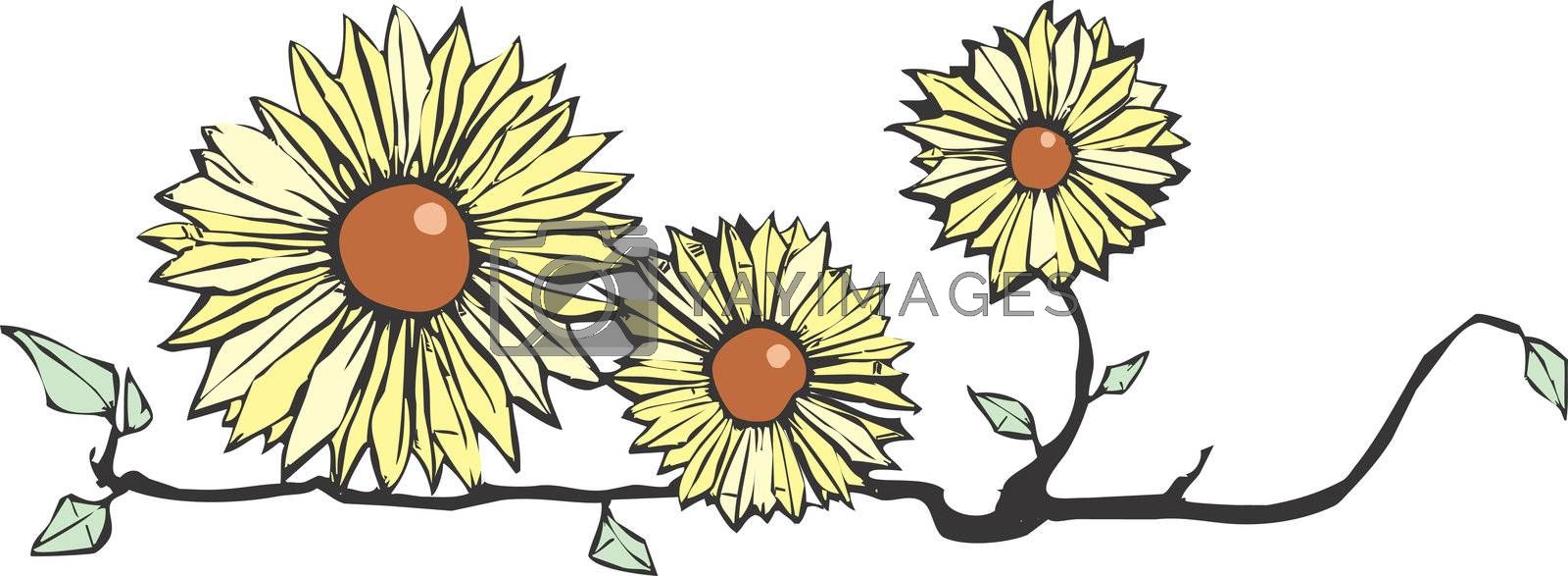 Three flowers on a stem in yellow and brown.