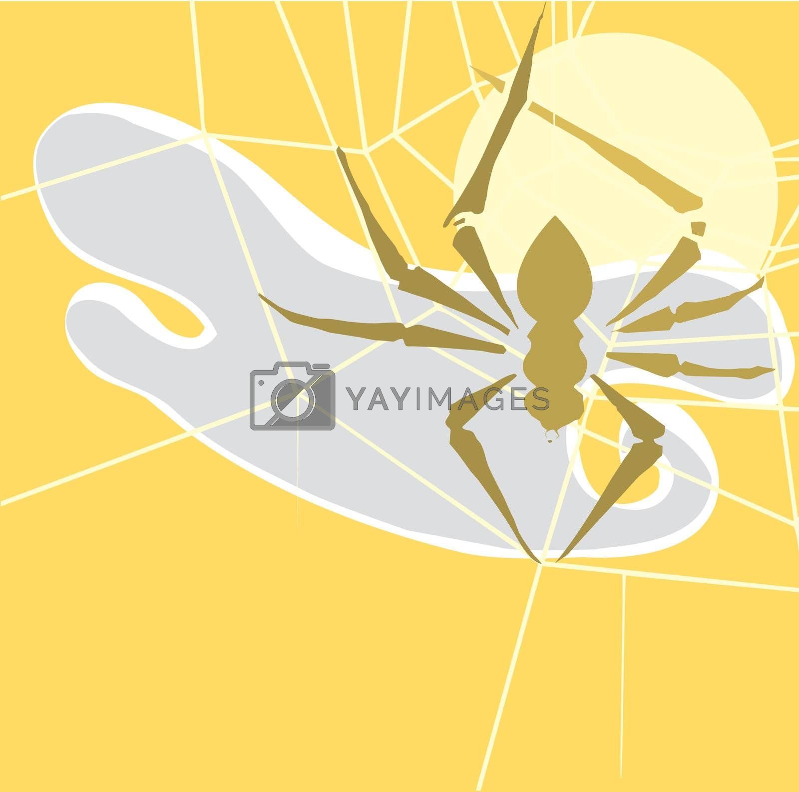 Small spider in shadow spinning its web.