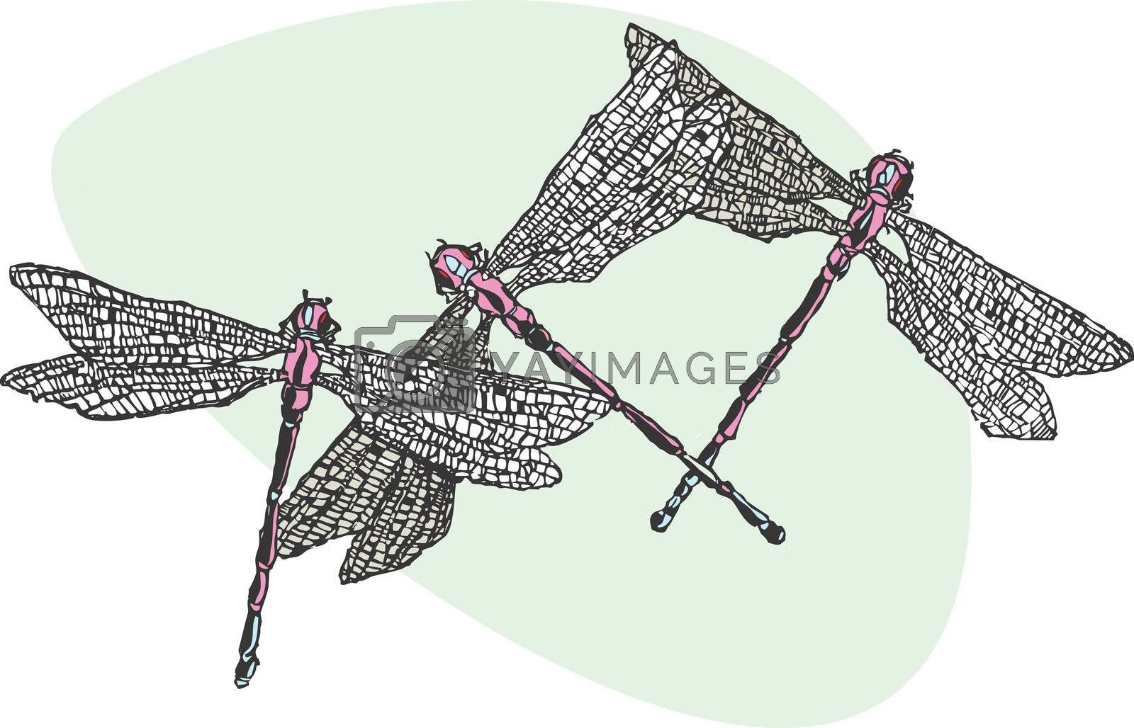 Three purple and blue dragonflies flying together.