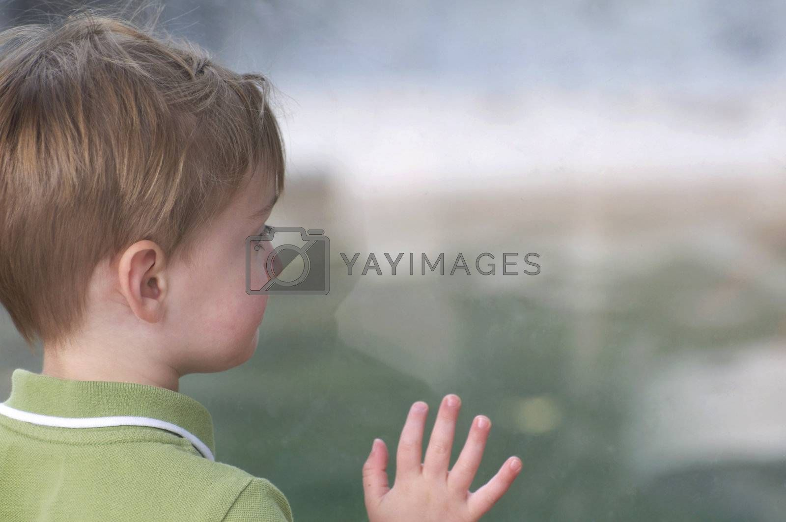 A cute little boy peers through the glass at the Denver Zoo, looking at the animals on the other side.