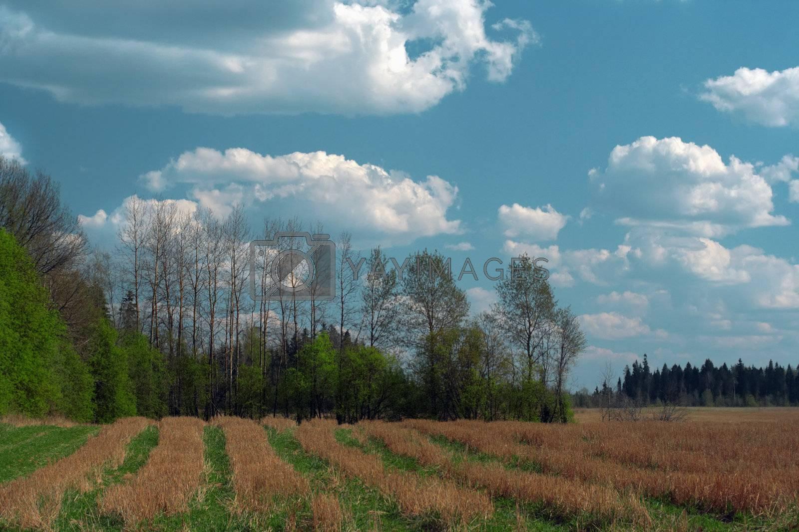 Meadow under the blue sky
