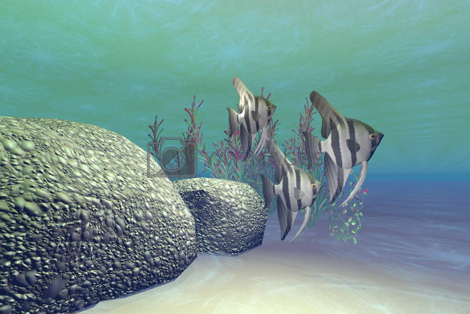 Royalty free image of ANGEL FISH by Catmando