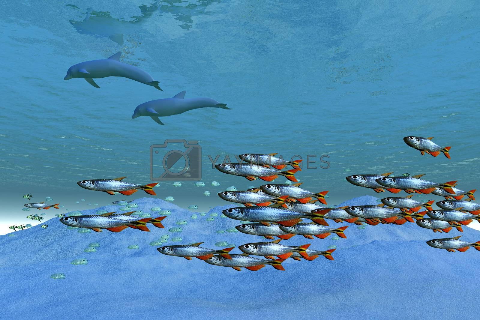 Schools of fish swim in the blue ocean.