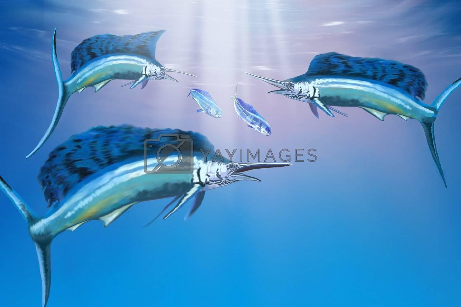 Three sailfish hunt for their prey.