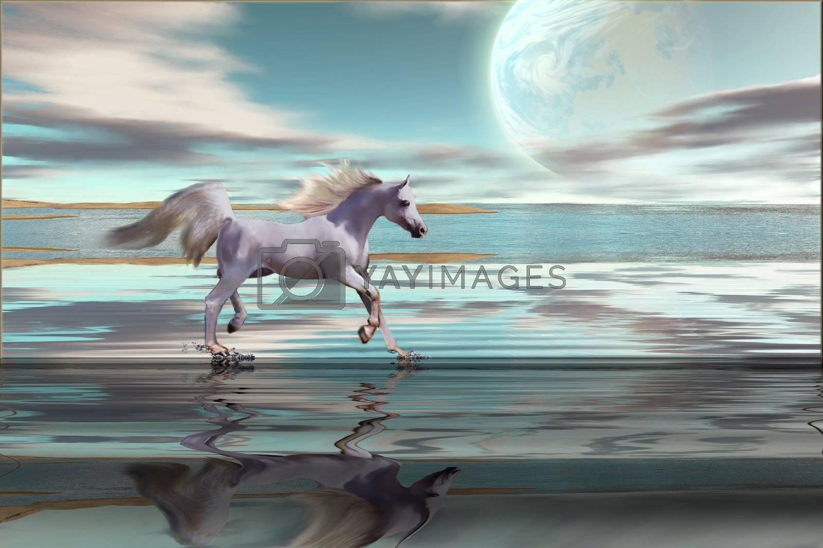 A white Arabian stallion gallops across the shallows on an ocean beach.