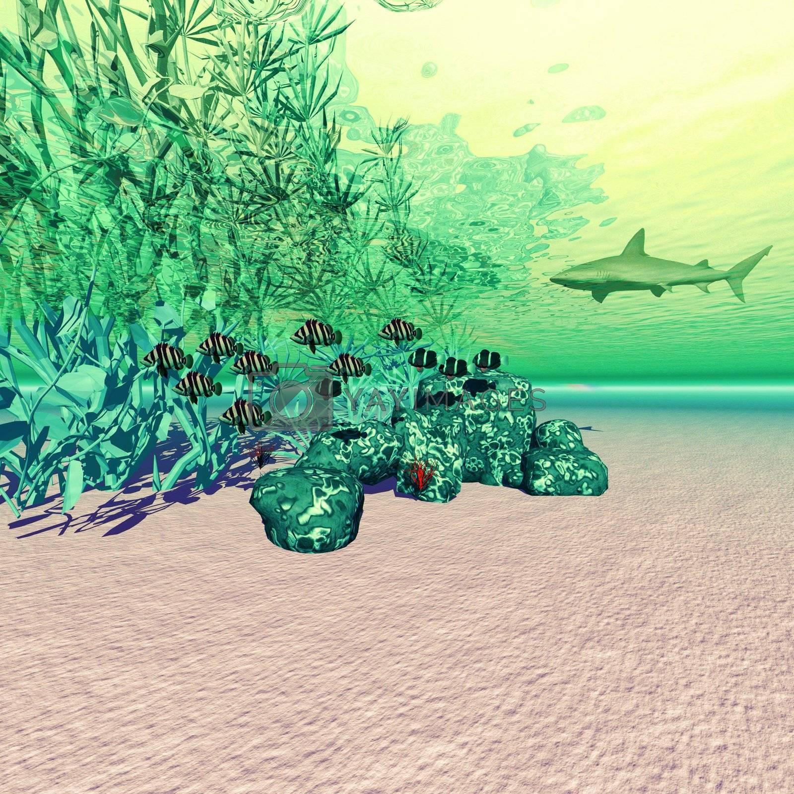 Coral reef life in the deep ocean.