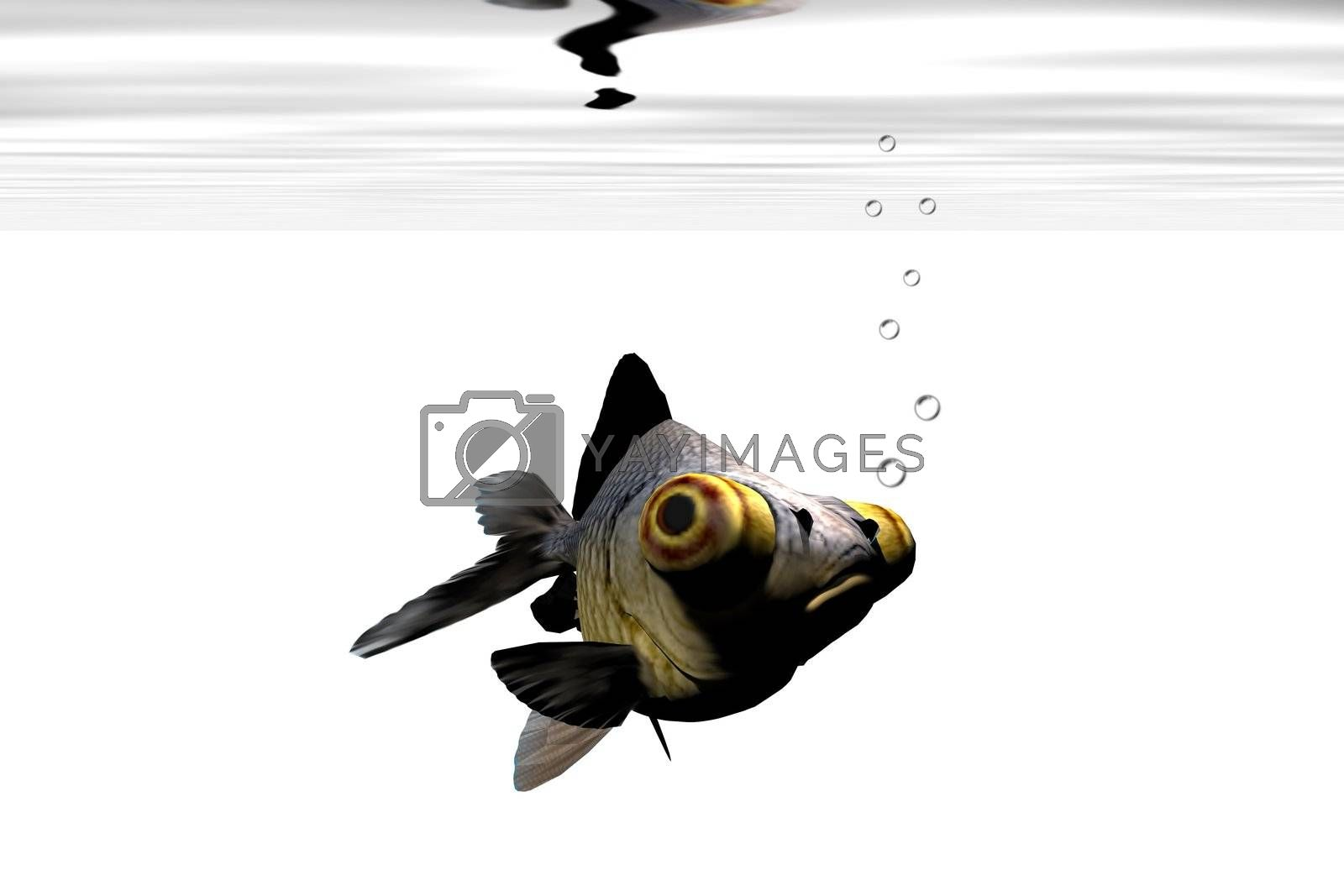A google-eyed goldfish stares out from his aquarium.