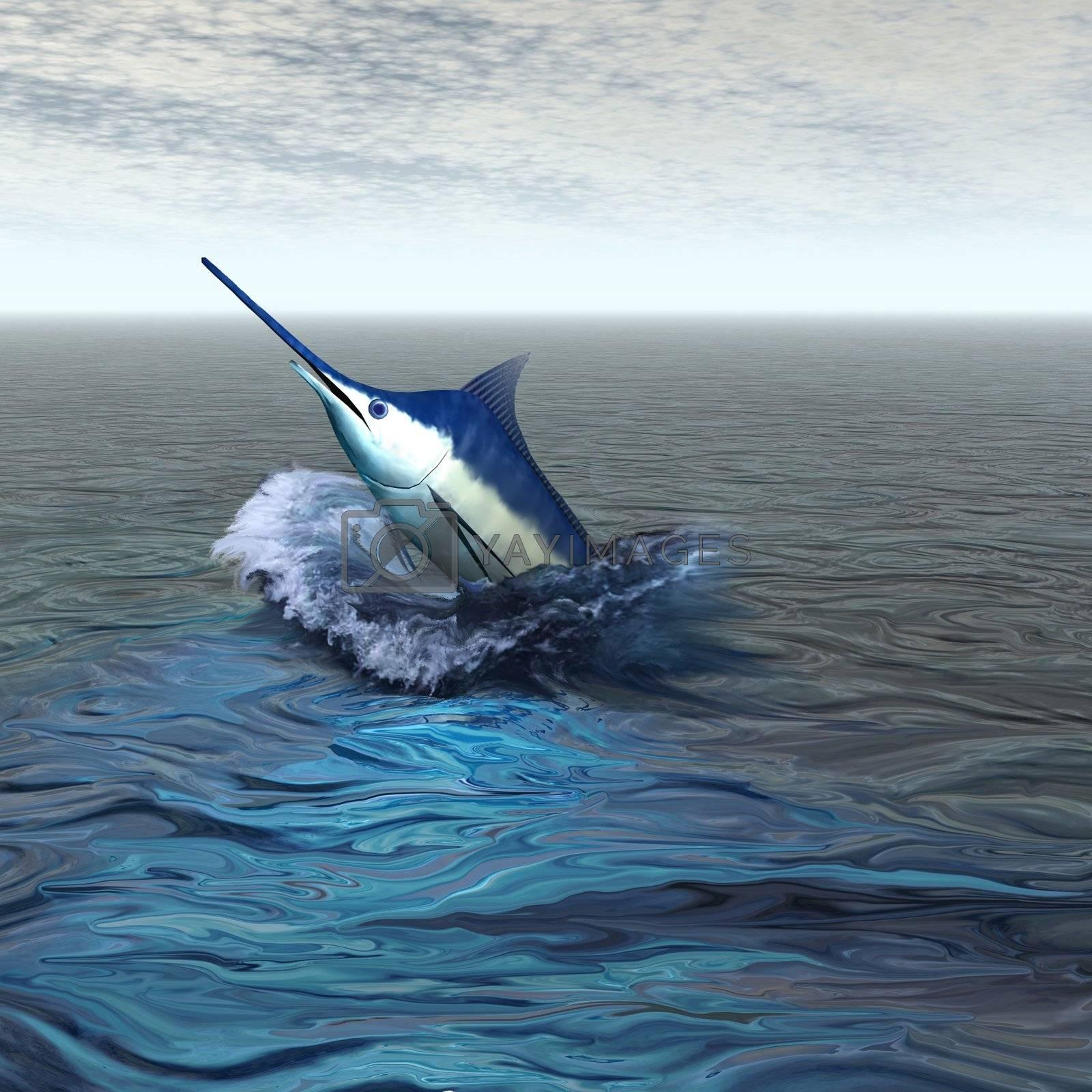 A beautiful marlin breaches from the ocean.