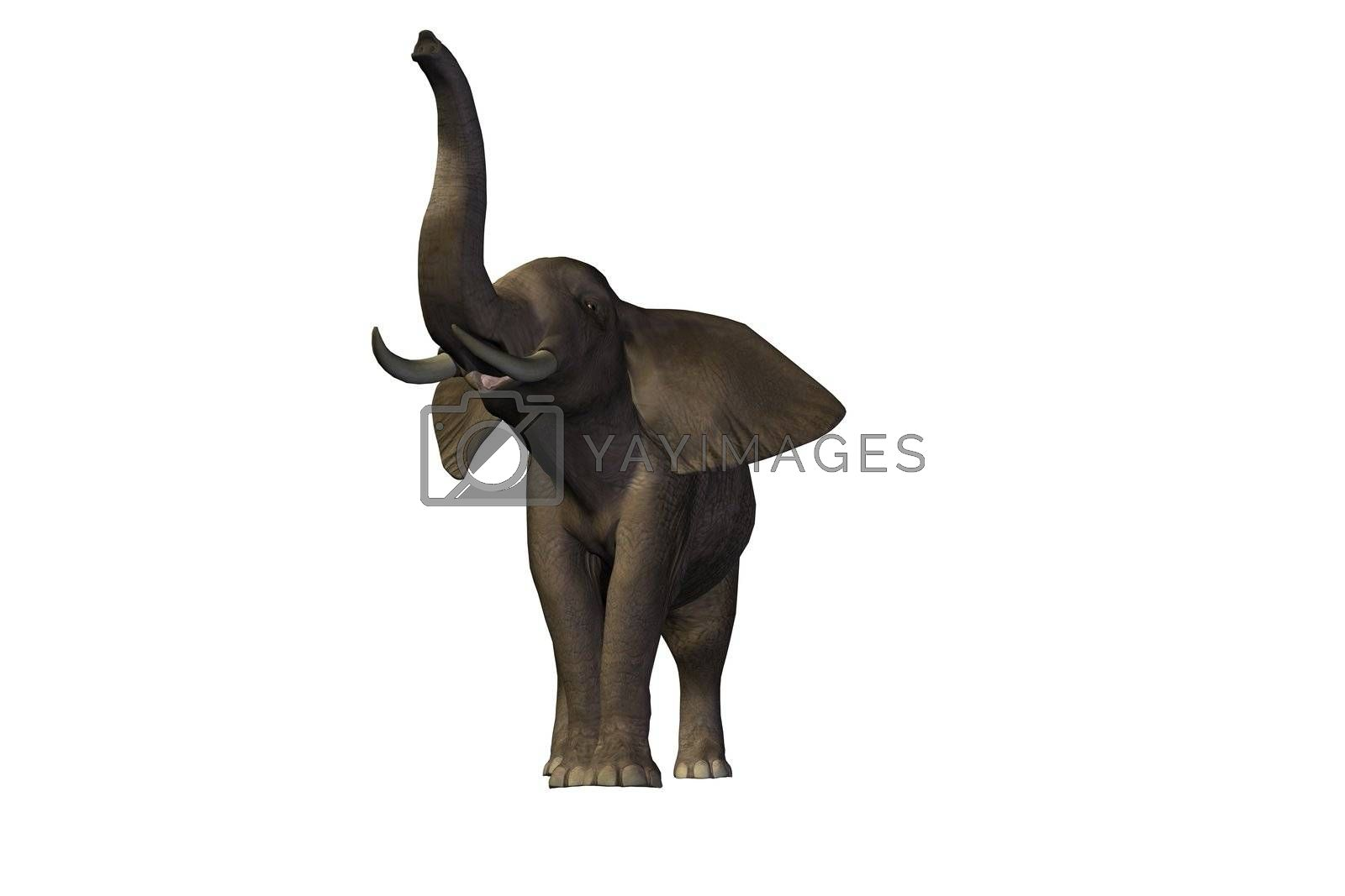 Beautiful pachyderm male with enormous tusks.