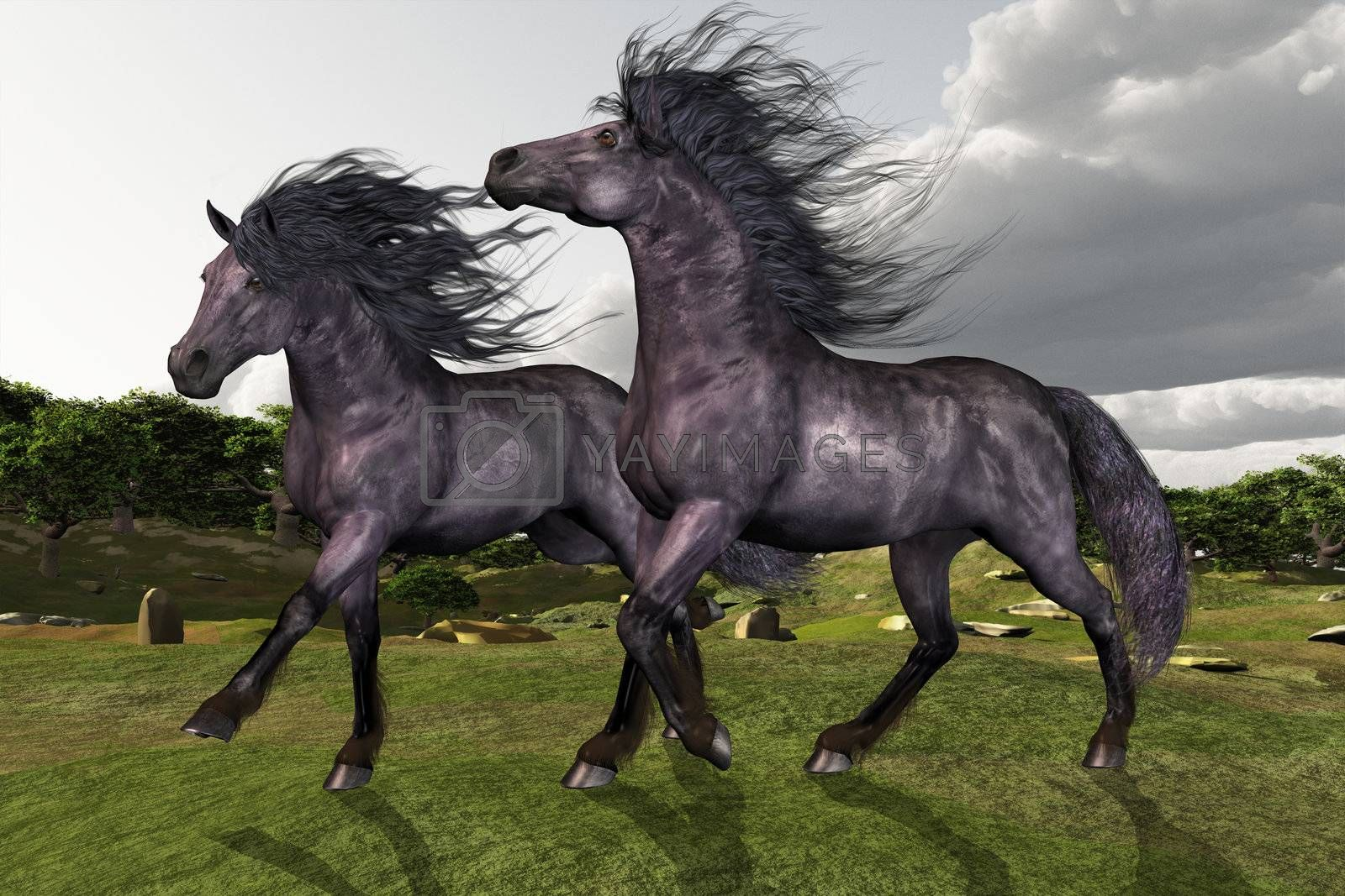 Two Friesian stallions run in green fields and hills.