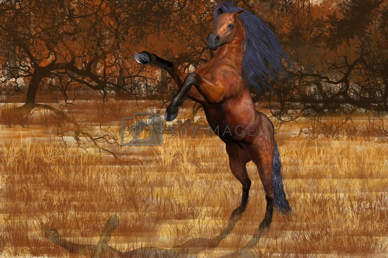 An beautiful Arabian stallion rears up feeling frisky in the colors of autumn.
