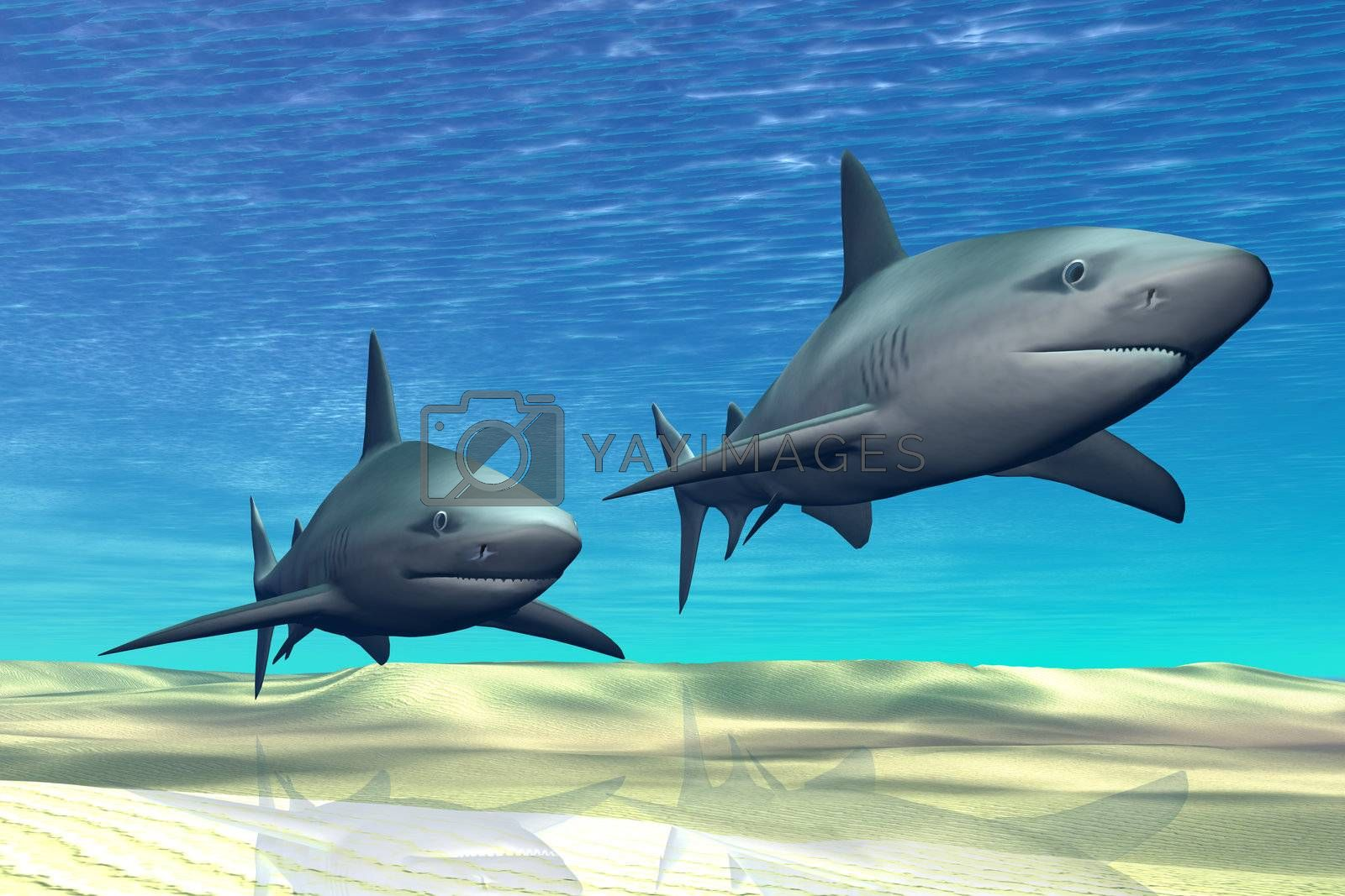 Two sharks on patrol over a sandy reef.