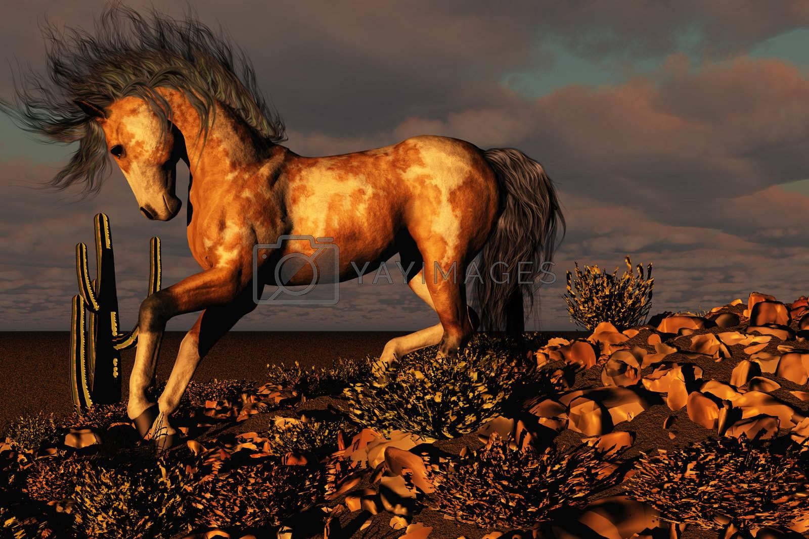 A wild paint horse runs down a rocky hill in the desert.