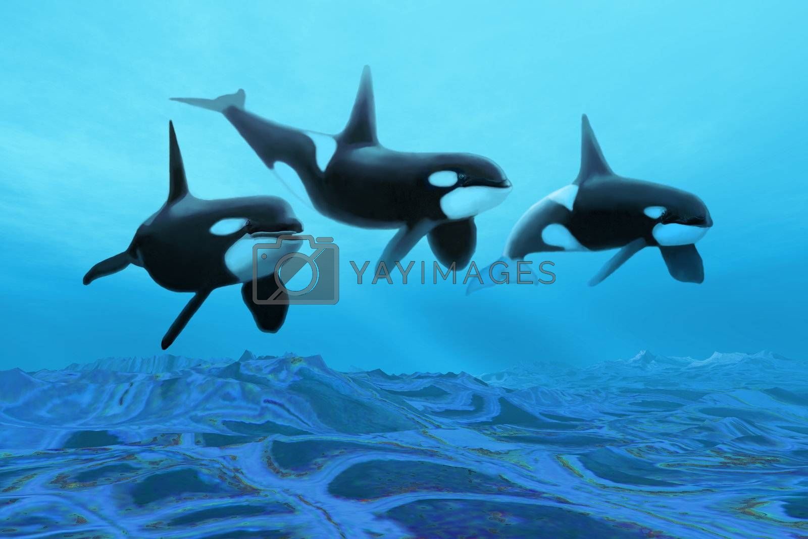 Royalty free image of WHALE WORLD by Catmando