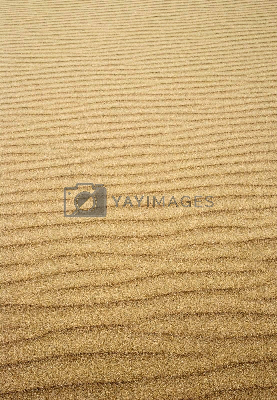ripples in the sand left by the tide