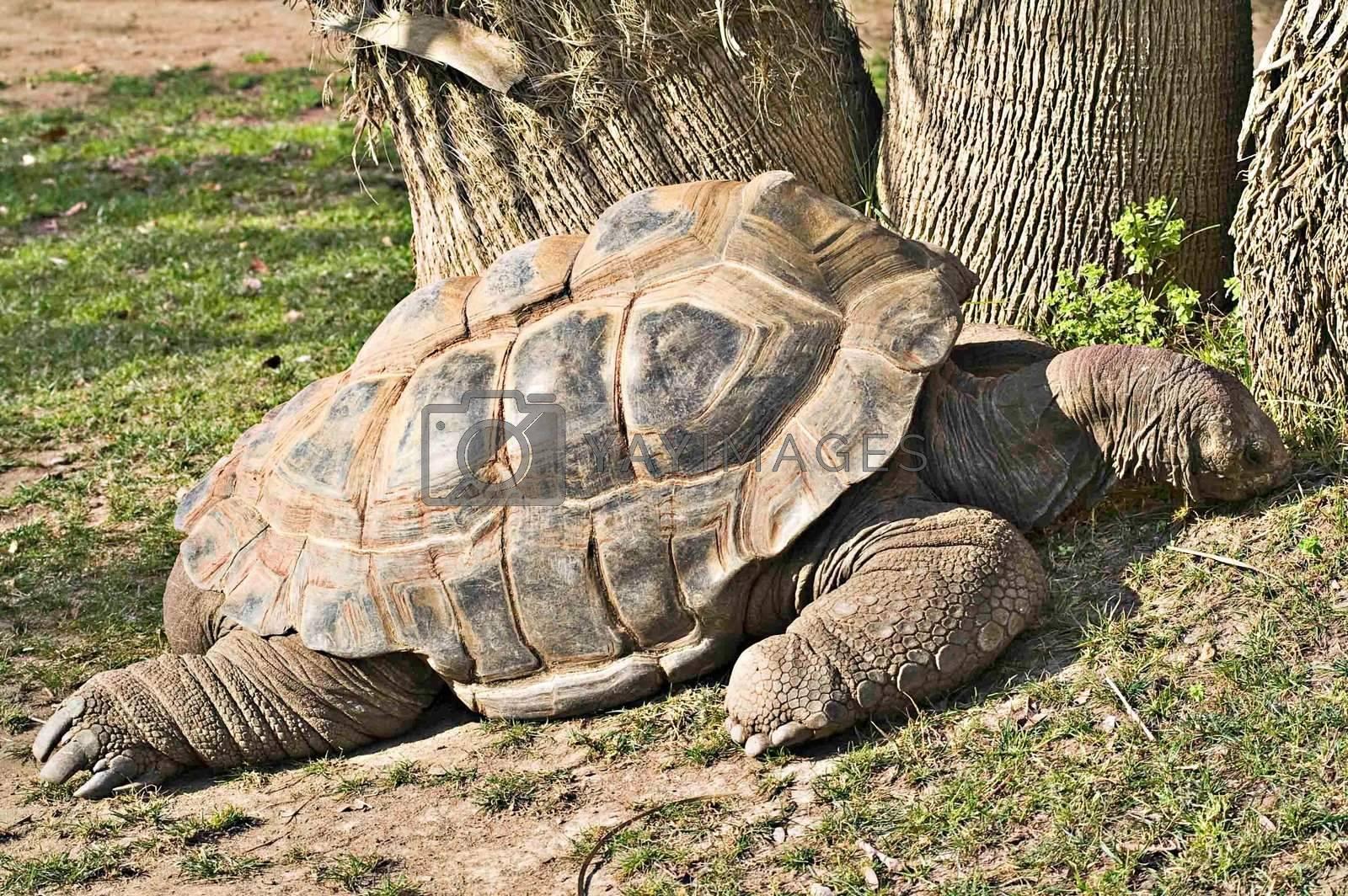 Big turtle at zoo