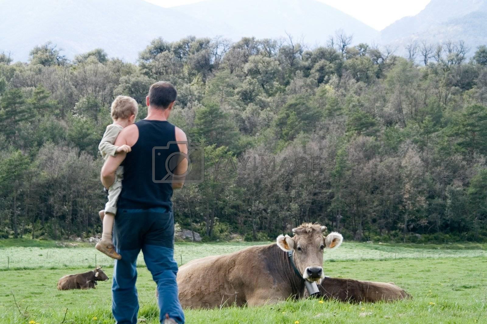 Cow in freedoom in a field