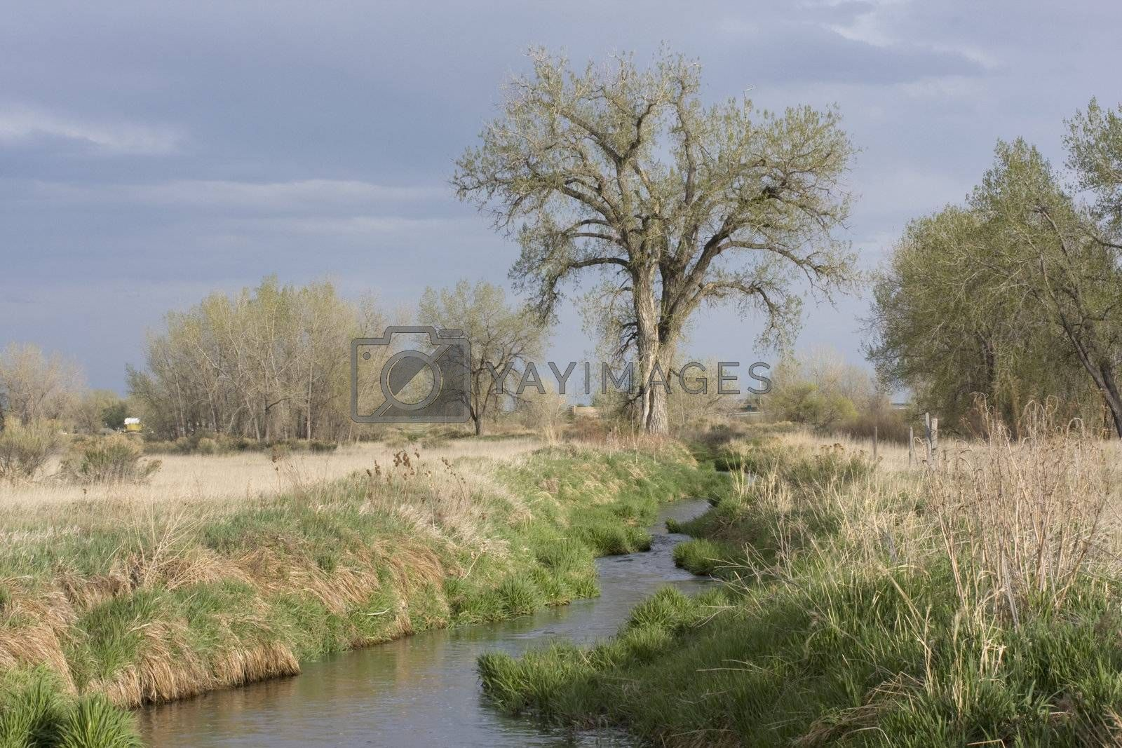 narrow irrigation ditch with fast flowing water, springtime, Colorado