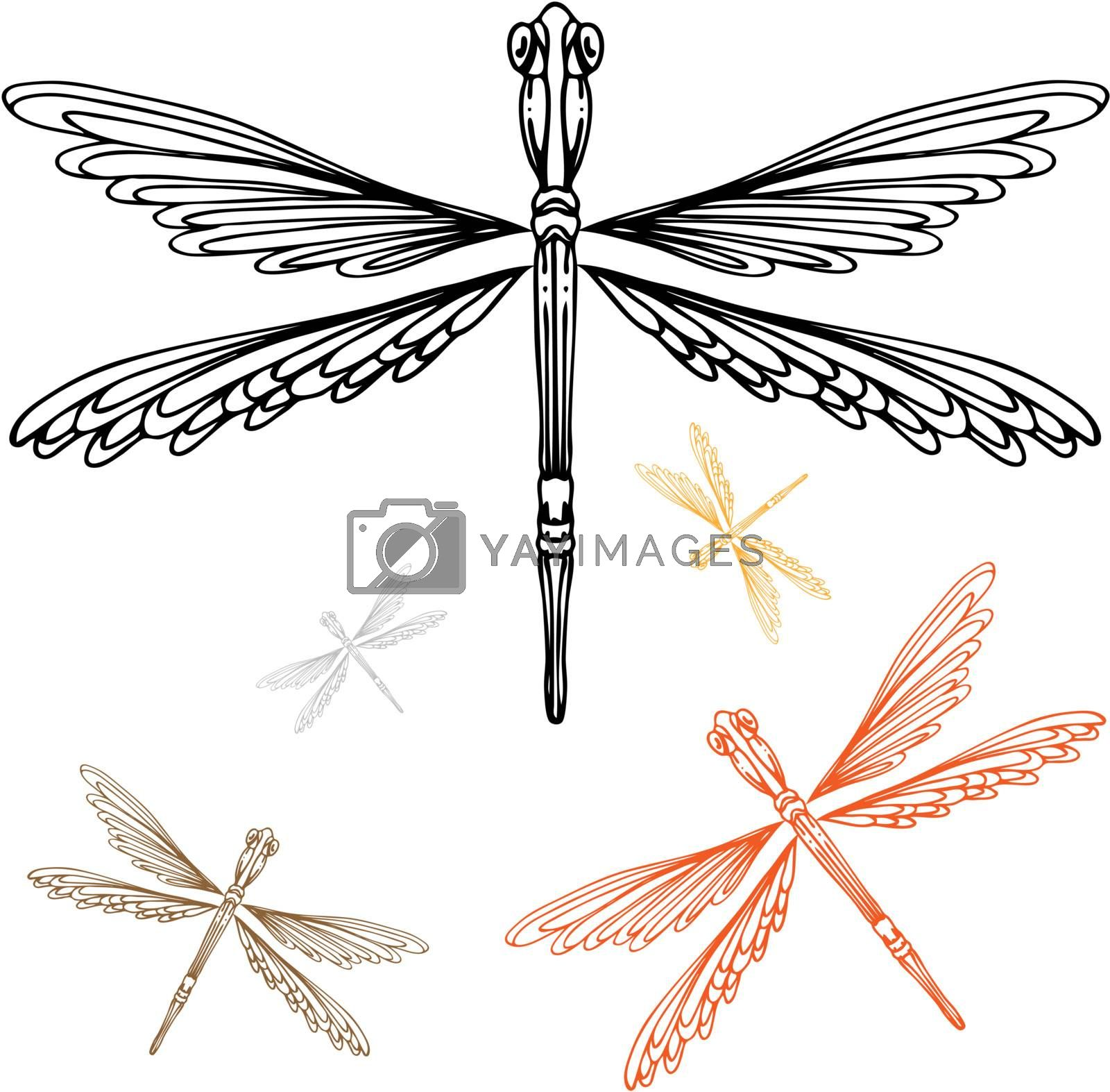 An image of a detailed dragonfly.